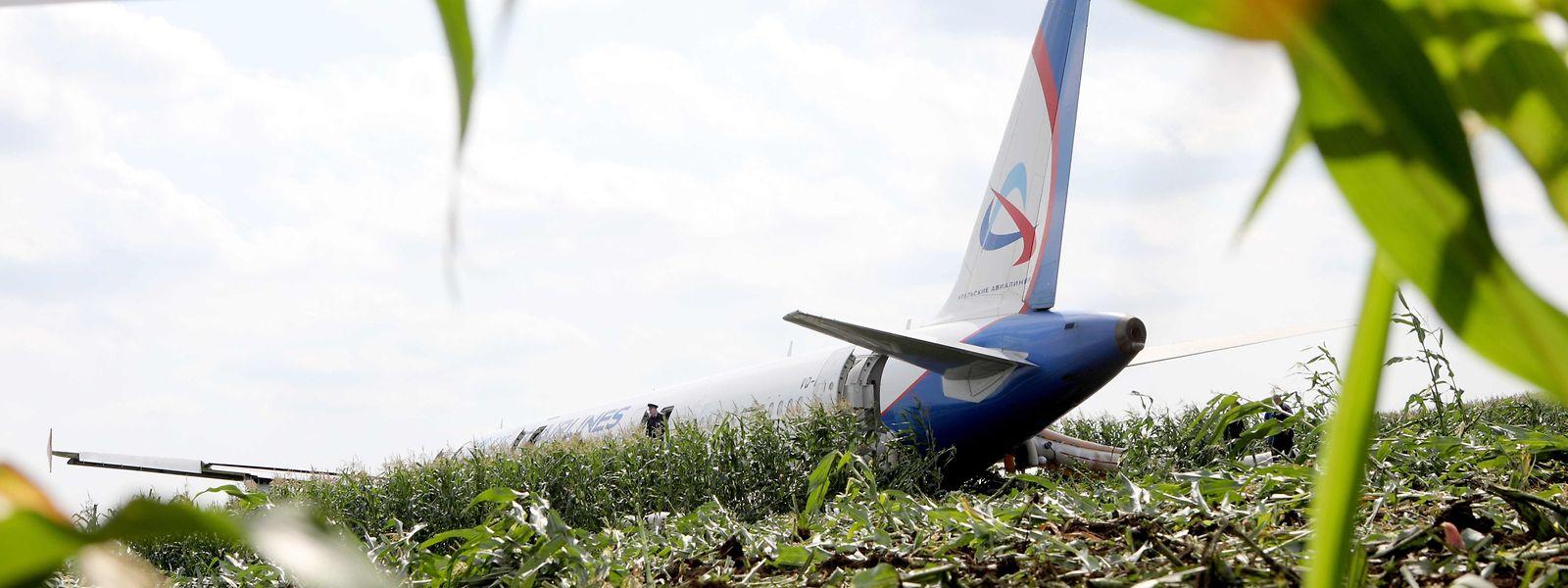 Ein russisches Passagierflugzeug mit mehr als 230 Menschen an Bord ist nach einer Kollision mit Vögeln bei Moskau in einem Maisfeld gelandet.