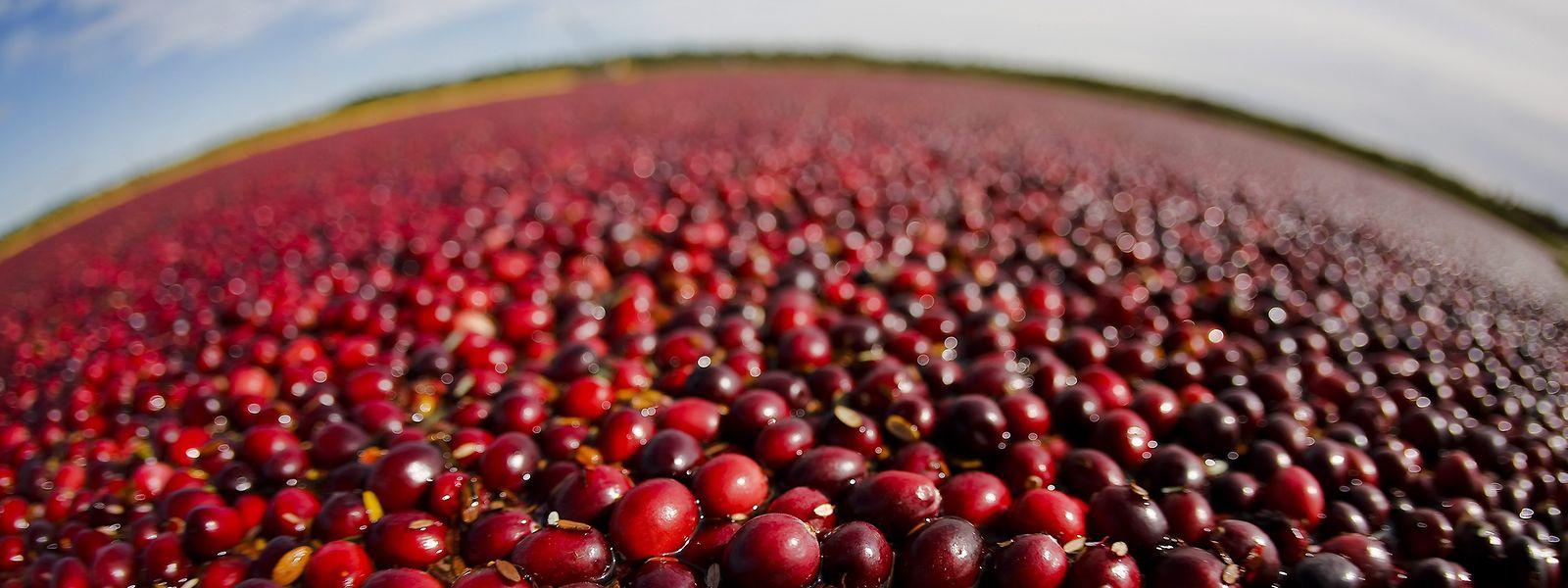 Auch die Einfuhr von Cranberries aus den USA sind von den neuen EU-Zöllen betroffen.