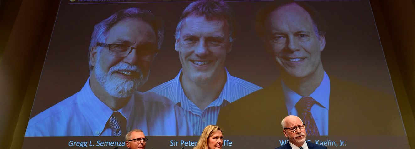 Nobel Assembly members (L-R) Patrik Ernfors, Anna Wedell and Randall Johnson sit in front of a screen displaying the winners of the 2019 Nobel Prize in Physiology or Medicine (L-R) Gregg Semenza, Peter Ratcliffe and William Kaelin after their names were announced during a press conference at the Karolinska Institute in Stockholm, Sweden, on October 7, 2019. - US researchers William Kaelin and Gregg Semenza and Britain's Peter Ratcliffe won the Nobel Medicine Prize for discoveries on how cells sense and adapt to oxygen availability, the Nobel Assembly said. (Photo by Jonathan NACKSTRAND / AFP)