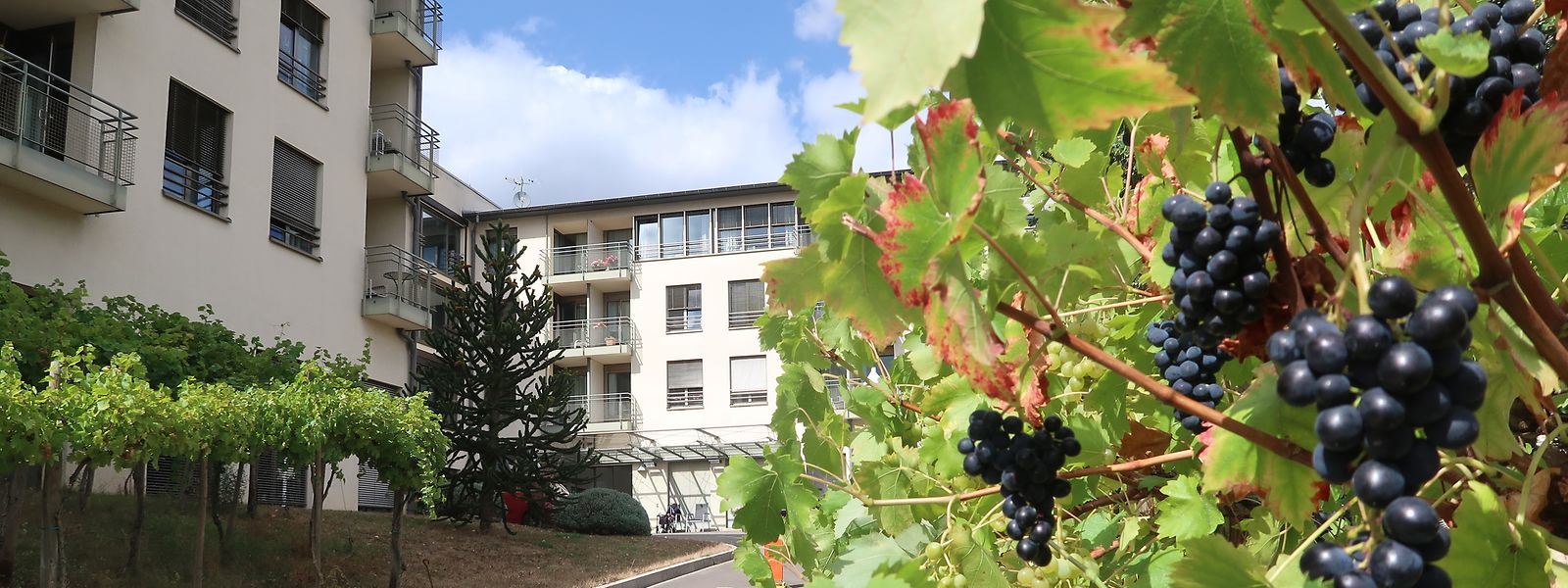 Das Altenheim mit Blick auf Weinberge und Mosel könnte bald in andere Hände wechseln.