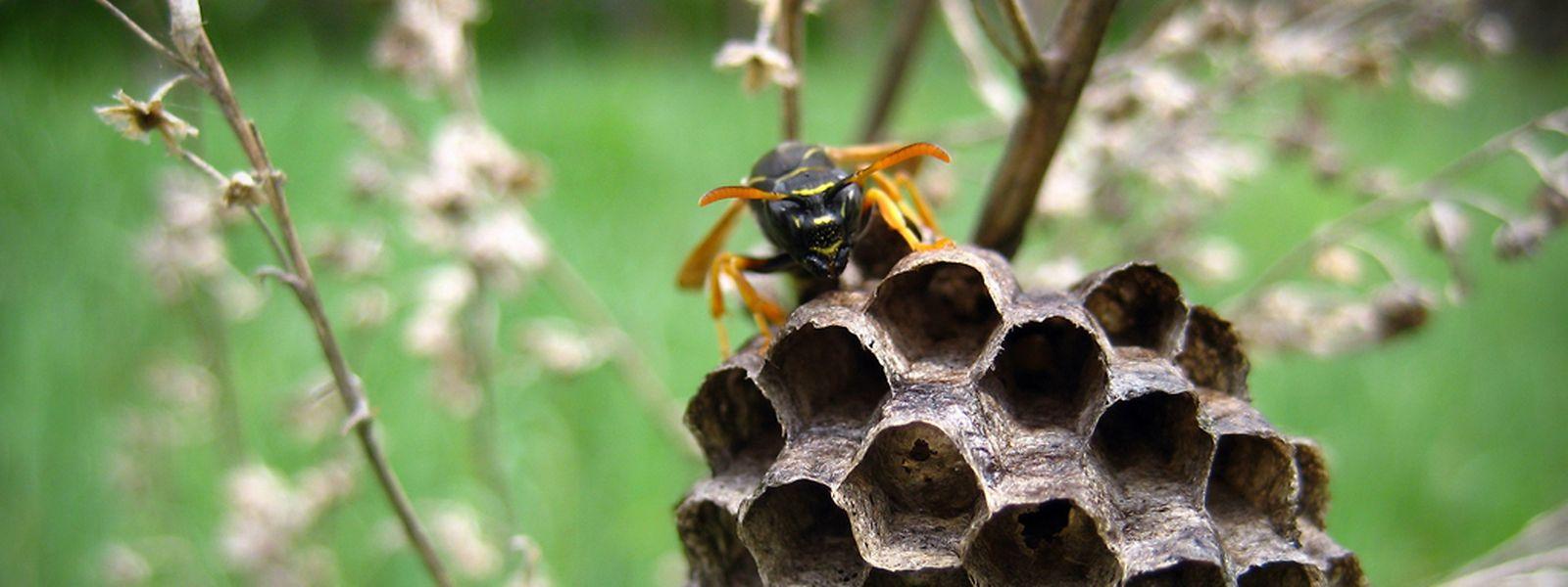 wie entferne ich ein wespennest free wespennest im with wie entferne ich ein wespennest great. Black Bedroom Furniture Sets. Home Design Ideas