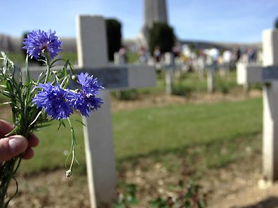 The little blue flowers that have grown for a century now near the graves of the war dead at Douaumont can easily be mistaken for local forget-me-nots. In fact they are a foreign import, an American flower brought as seeds on the hooves of the US army horses used at Verdun during World War I.