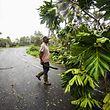 Auf der Insel Guadeloupe wurde ein Mensch von einem Baum erschlagen.