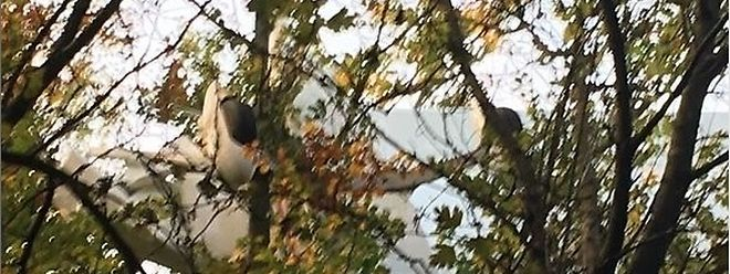 L'Aeroprakt A20 immatriculé au Luxembourg s'est crashé dans un arbre. Son pilote s'en est sorti indemne mais est resté coincé un long moment à une vingtaine de mètres du sol.
