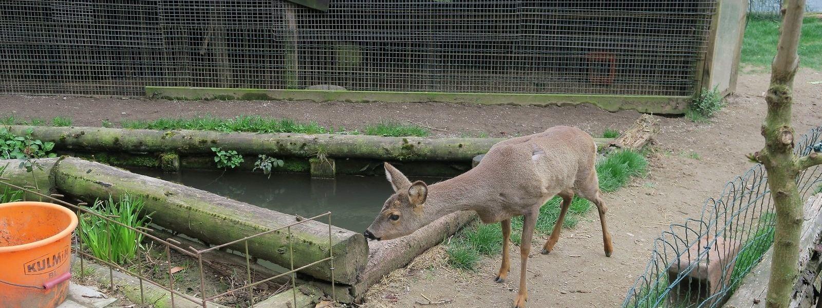 Das Halten von Wildtieren ist nicht mit einer artgerechten Tierhaltung vereinbar.