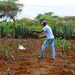 Reportagem. Agricultores cabo-verdianos pedem a Deus mais chuva