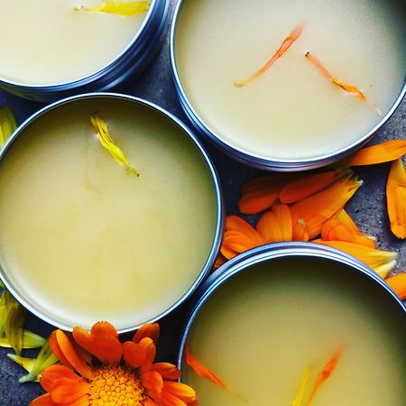 Calendula salve Photo: Botanika