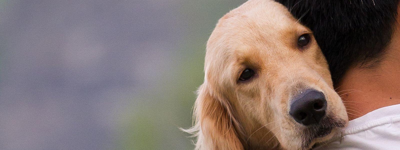 """Hunde, die nicht angeleint oder unzureichend erzogen sind, laufen eher Gefahr, sich durch den Verzehr eines vermeintlichen """"Leckerlis"""" zu vergiften oder zu verletzen."""