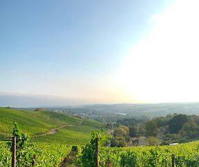 Wine Hike