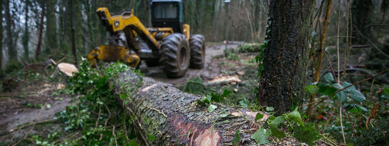 Nach dem Sturm mussten Straßen und Waldwege geräumt werden.