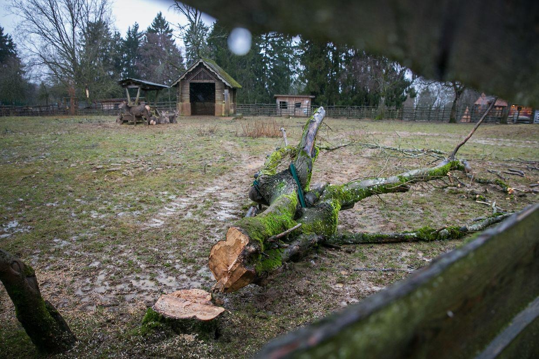 Im Tierpark hat der Sturm seine Spuren hinterlassen.