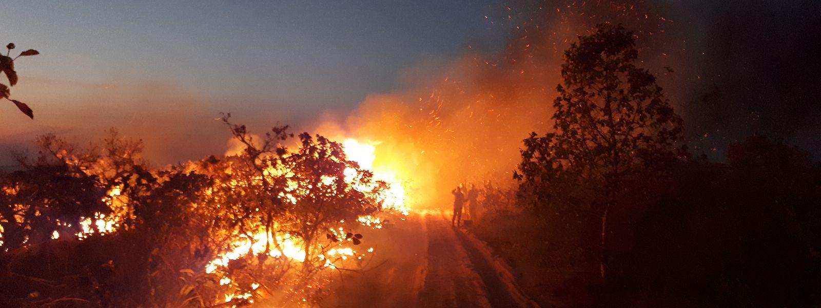 Auf diesem vom Chico Mendes Institut zum Schutz der Artenvielfalt zur Verfügung gestellten Bild beobachtet eine Gruppe die Flammen bei einem Waldbrand im Naturpark Chapada dos Guimaraes.