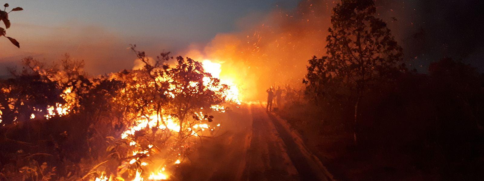 Waldbrand im Naturpark Chapada dos Guimaraes. Seit Wochen wüten Tausende Feuer im Amazonasgebiet und den angrenzenden Steppengebieten.