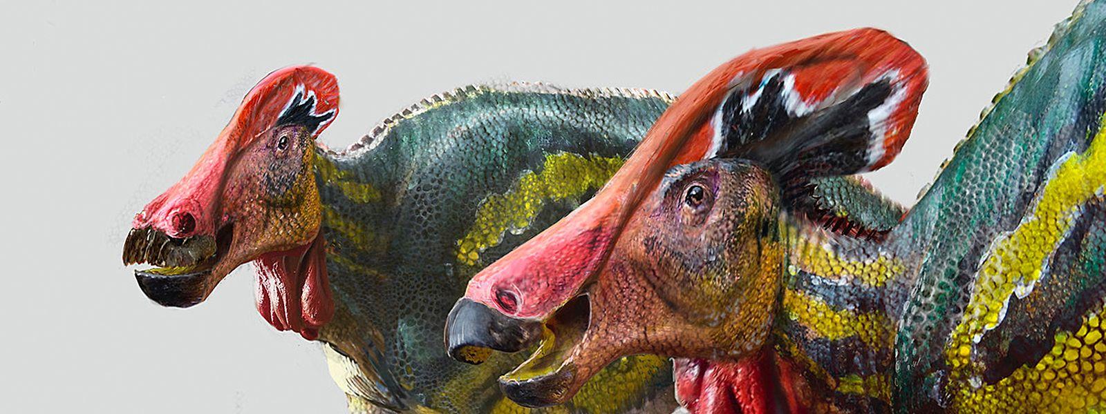 Die Illustration zeigt zwei Exemplare der Art Tlatolophus galorum.