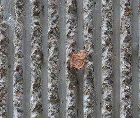 Karger Schmuck an Sichtbetonmauer