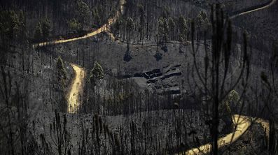 A road meanders among burnt forest areas affected by a wildfire in Vale do Cambra, some 30 km to Pedrograo Grande, on June 20, 2017. The huge forest fire that erupted on June 17, 2017 in central Portugal killed at least 64 people and injured 135 more, with many trapped in their cars by the flames.   / AFP PHOTO / MIGUEL RIOPA