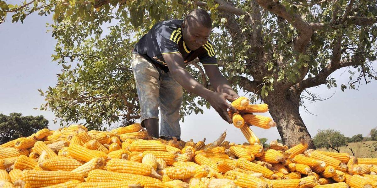 In dem kleinen Dorf leben die Bewohner vorwiegend von der Landwirtschaft. Arbeit gibt es kaum. Dies treibt viele junge Männer in die Flucht.