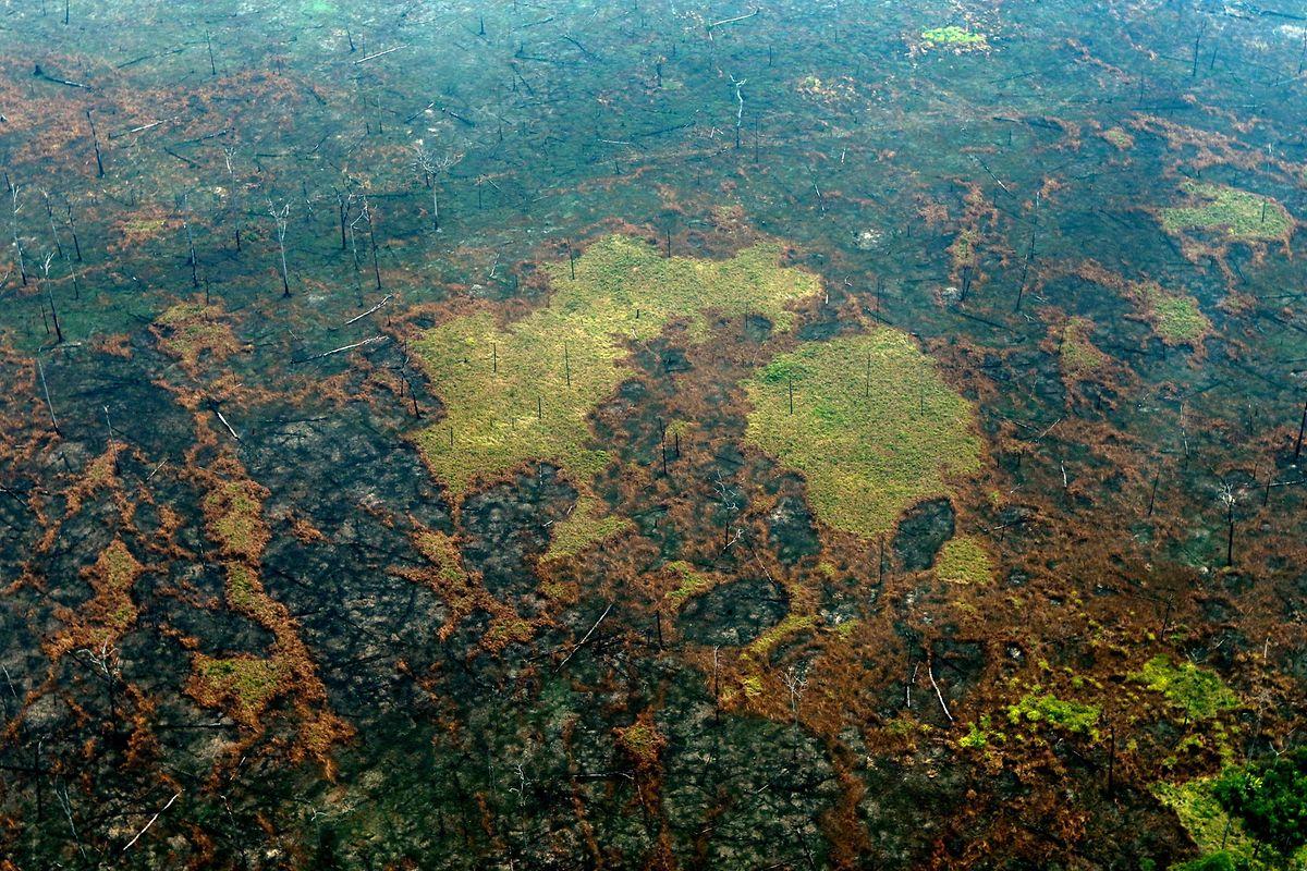 Verbranntes Amazonasgebiet in der Nähe von Boca do Acre in Brasilien.