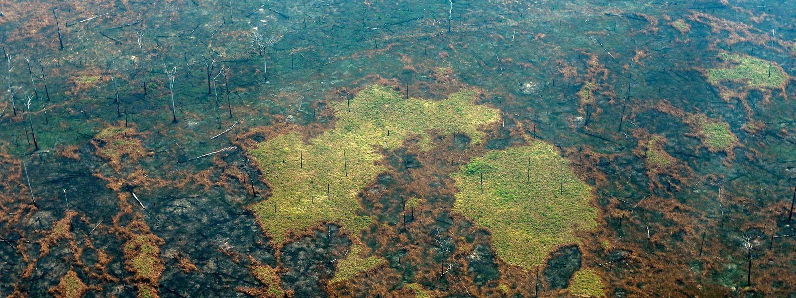 Abgebrannter Regenwald.