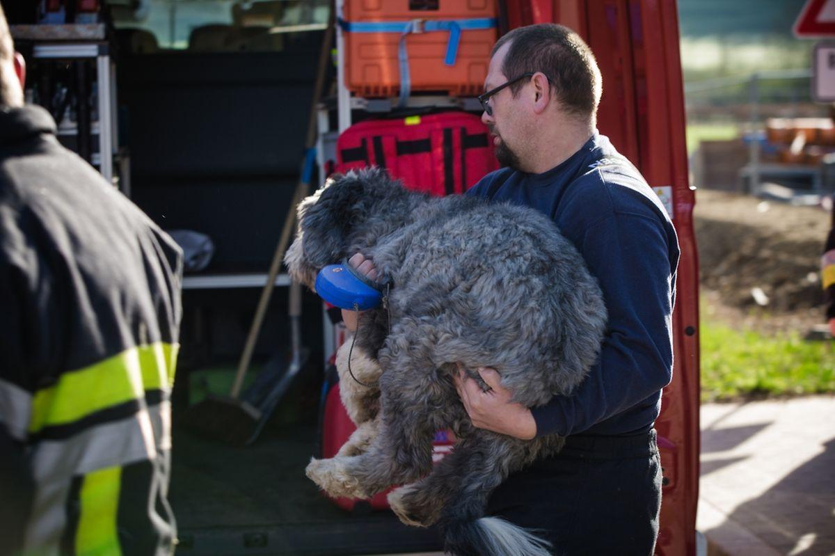 Rettungskräfte bargen den traumatisierten Hund.