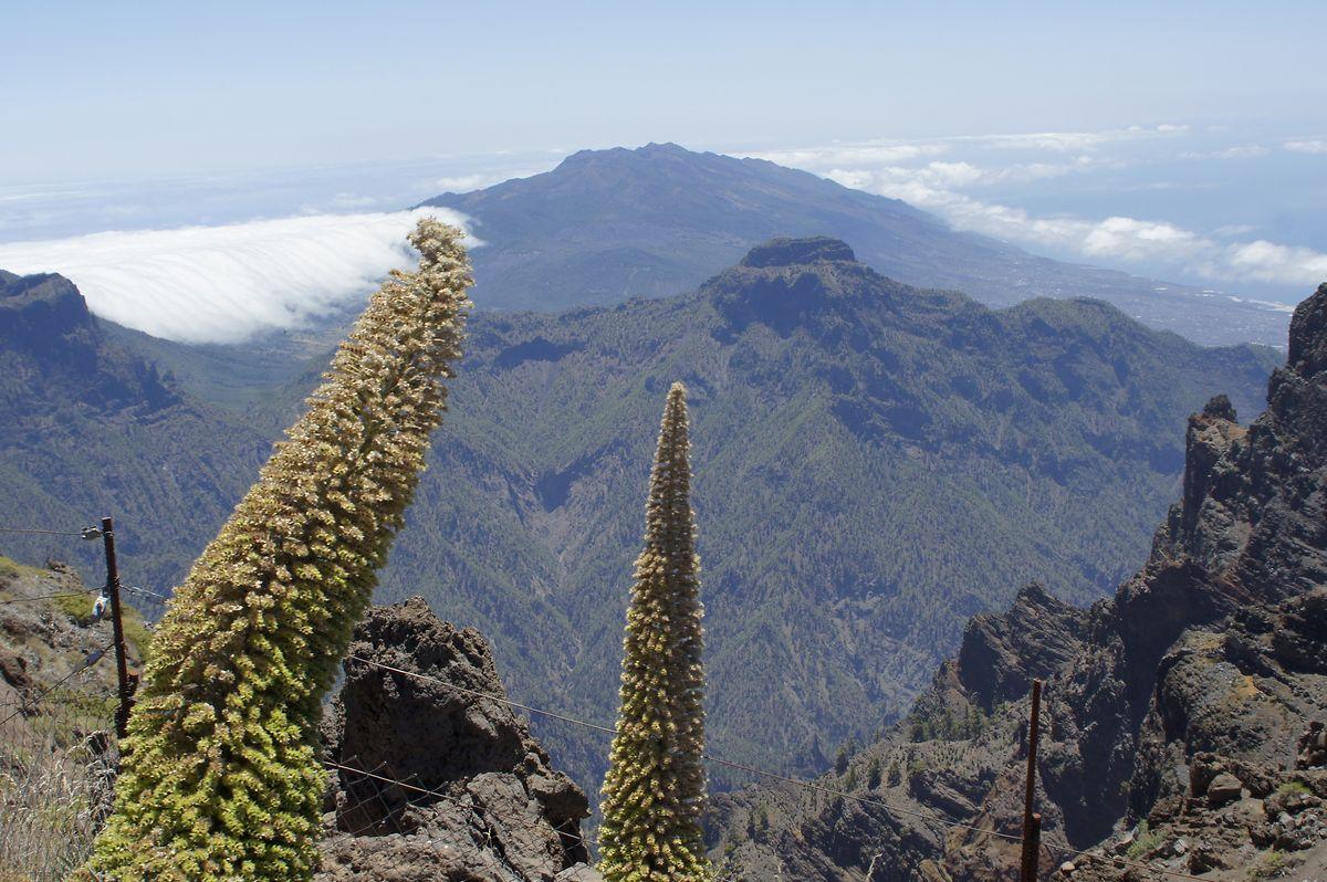 Ausblick vom Roque de los Muchachos, mit 2426 Metern der höchste Punkt von La Palma. Hier ist der Himmel immer extrem klar, da die Wolkenschicht auf der Kanareninsel in 700 bis 1500 Metern gebildet wird. Die Wolken schaffen es meist nicht, den massiven Gebirgszug der Cumbres zu überwinden (links im Hintergrund im Bild).