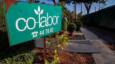 Co-labor betreibt Projekte im Umwelt- und Naturbereich, darunter die Bio-Baumschule an der Route d'Arlon in der Hauptstadt.