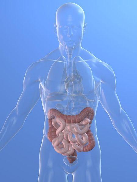 Dank HuMiX können Verdauungsprozesse untersucht werden, die mit bisherigen Techniken experimentell nicht zugänglich waren.
