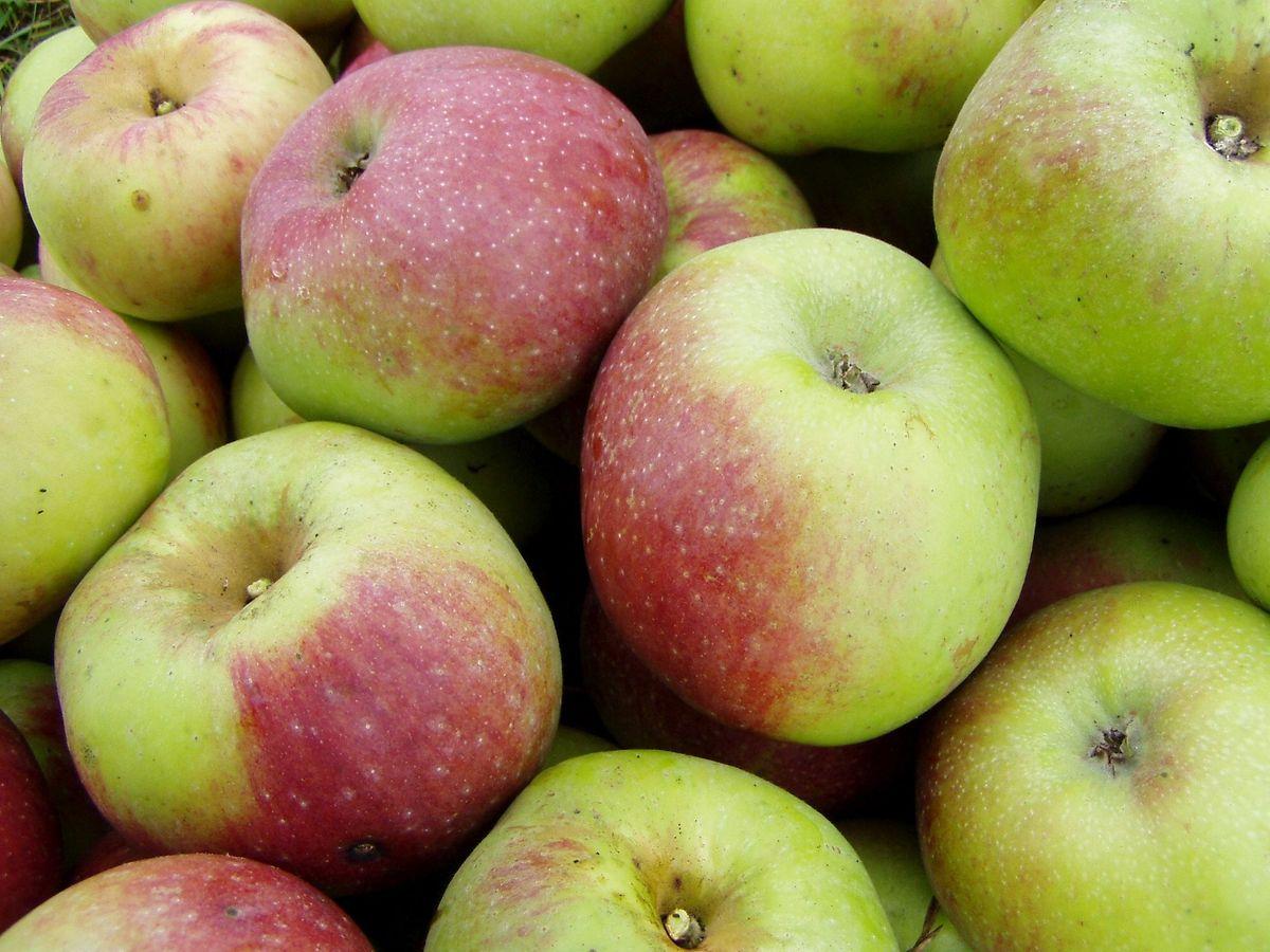 """Die am häufigsten vorkommende Apfelsorte ist der """"Rheinische Winterrambur"""", auch Rambo genannt. Der Winterapfel kann als Tafelapfel sowie für die Produktion von Fruchtsaft und Schnaps verwendet werden."""