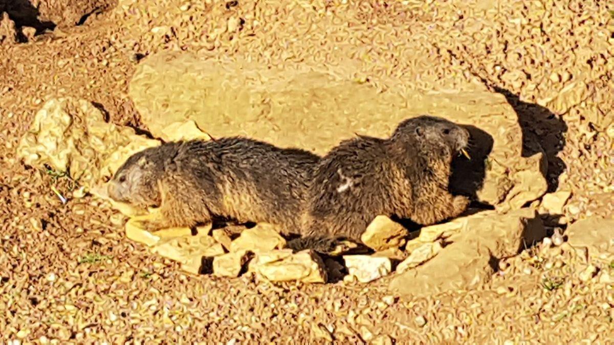 Nach dem Winterschlaf müssen sich die Tiere erst wieder an das Sonnenlicht gewöhnen.