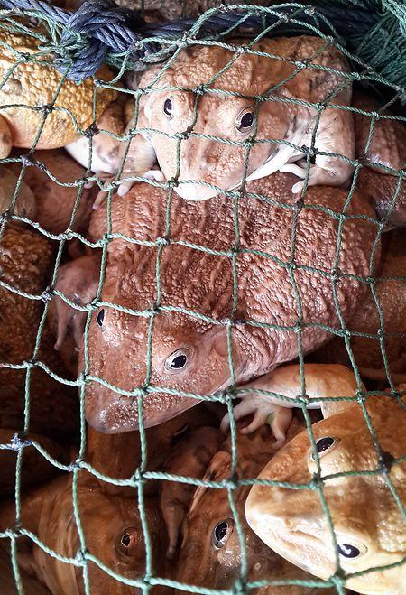 Wildtiermärkte könnten eine Gefahrenquelle für weitere Mutationen darstellen.