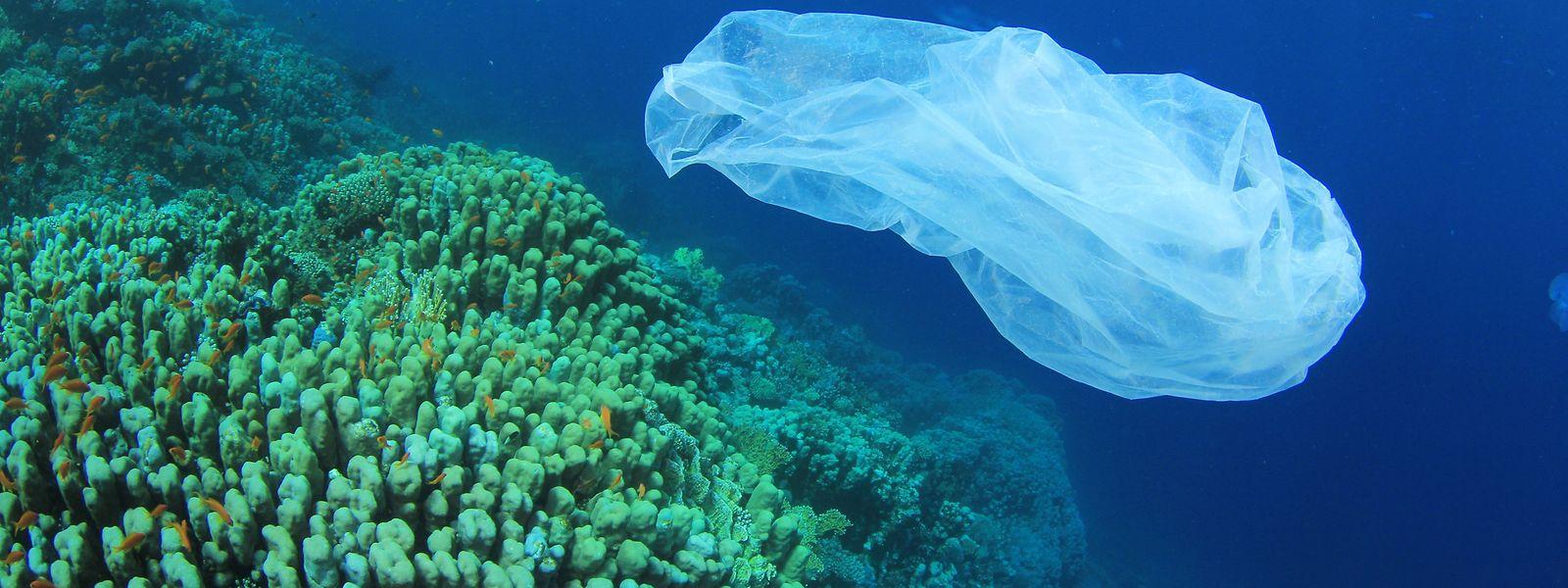Tödliche Gefahr oder köstlicher Mittagssnack: Eine gewöhnliche Plastiktüte kann von hungrigen Meeresbewohnern auch mit einer herumschwimmenden Qualle verwechselt werden.