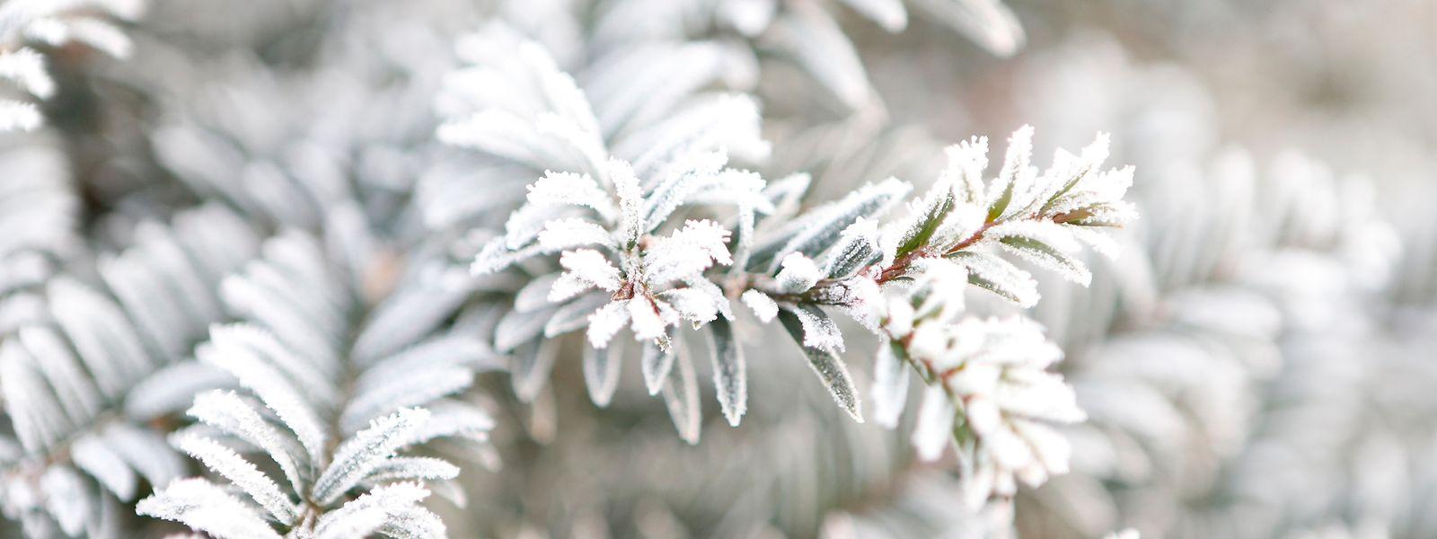 Vor allem in der Nacht werden die Temperaturen kommende Woche lokal auf mehr als -10 Grad sinken.
