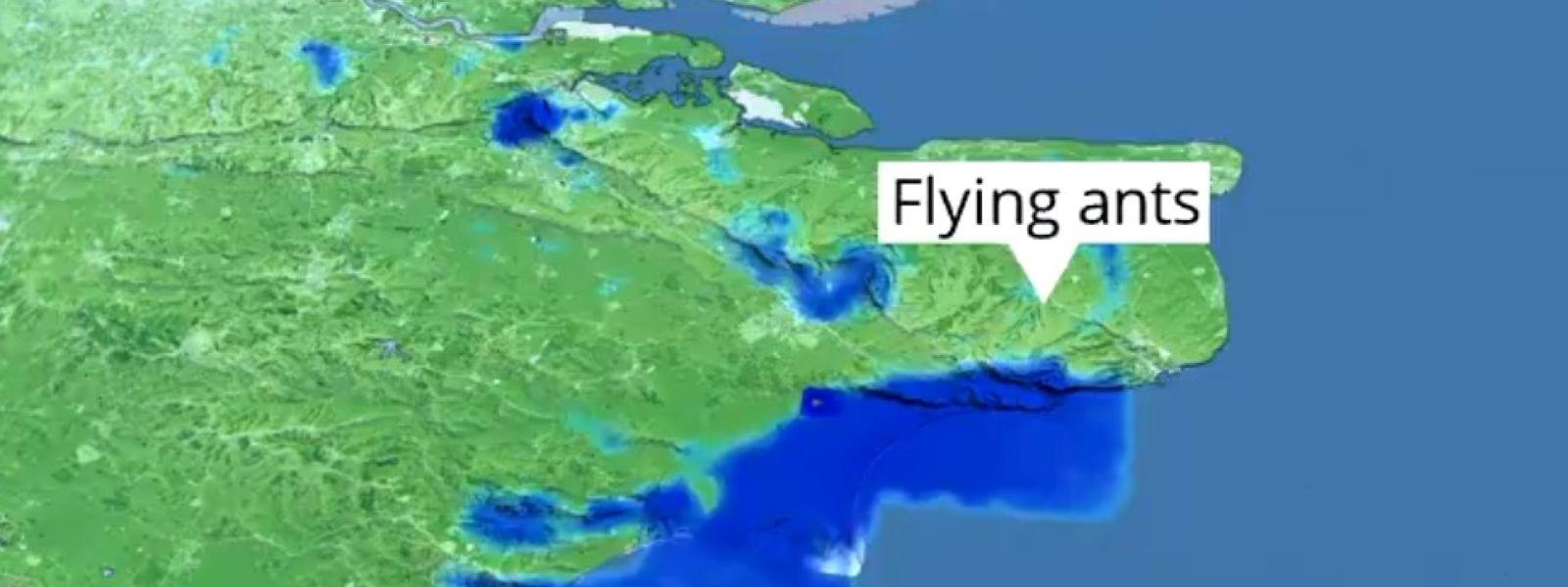 Das Radarbild zeigt einen Schwarm von fliegenden Ameisen über dem Südosten Englands.