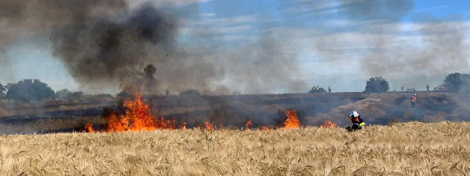 Am vergangenen Freitag: Sechs Feuerwehreinheiten bekämpfen einen Flurbrand zwischen Schüttringen und Canach.