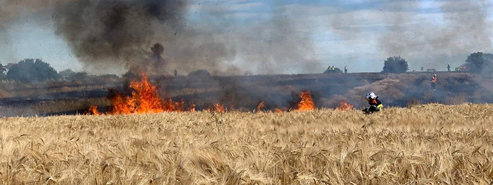 Am Samstag brannten in Luxemburg gleich mehrere Felder, wie hier zwischen Schüttringen und Canach.
