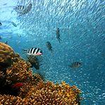 Oceanos. Redução de oxigénio é pior que o aumento de temperatura da água
