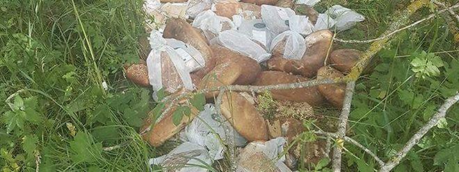 Der Urheber der Brotentsorgung soll mindestens an vier Stellen große Mengen Brot in die Natur geworfen haben.