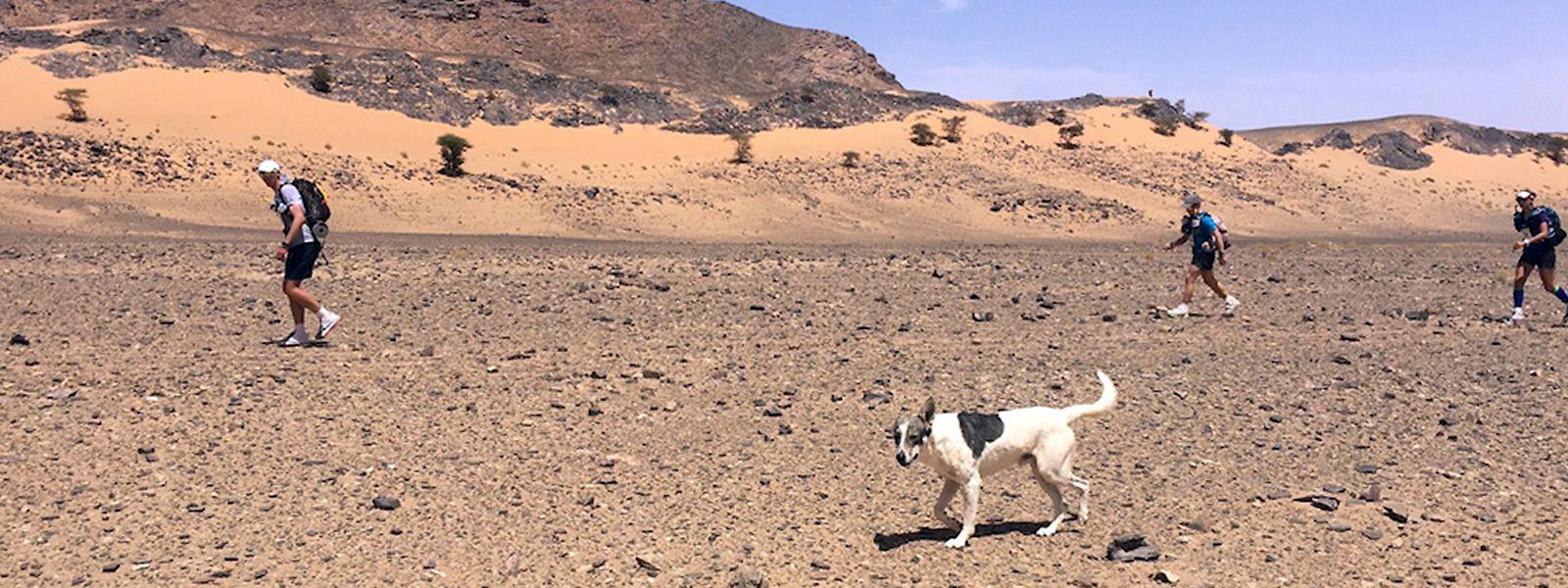 """Eine sportliche Leistung: Cactus läuft auf der zweiten Etappe des """"Marathon des Sables"""" mit den Teilnehmern durch die Sahara."""