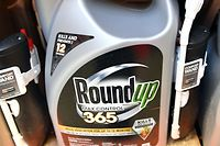 (FILES) In this file photo taken on July 9, 2018 Roundup products are seen for sale at a store in San Rafael, California. - The controversial Roundup weedkiller goes on trial again February 25, 2019 in the United States, six months after a groundskeeper won the first-ever lawsuit accusing the chemical of causing cancer. Roundup, a brand owned by German chemicals and pharmaceuticals giant Bayer after its purchase of US-based Monsanto last year, contains glyphosate which environmentalists and other critics have long believed causes cancer.Glyphosate is used in weed-killers made by several companies, and is currently the most used herbicide around the world. (Photo by JOSH EDELSON / AFP)