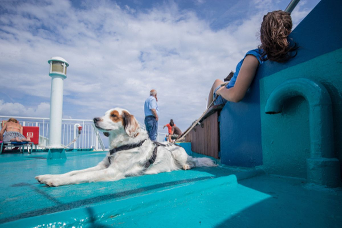 Rhine cruises with creature comforts included Photo: shutterstock