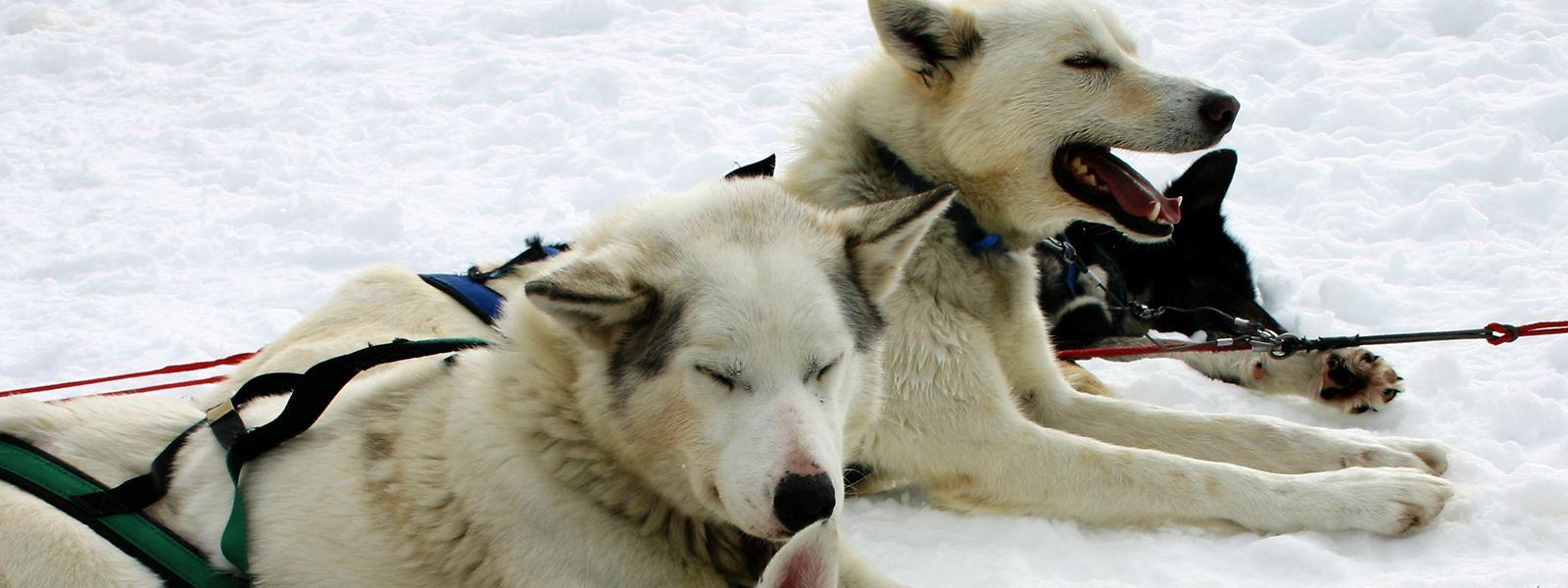 Kleine Verschnaufpause: Auch die agilen Hunde müssen mal eine Rast einlegen.