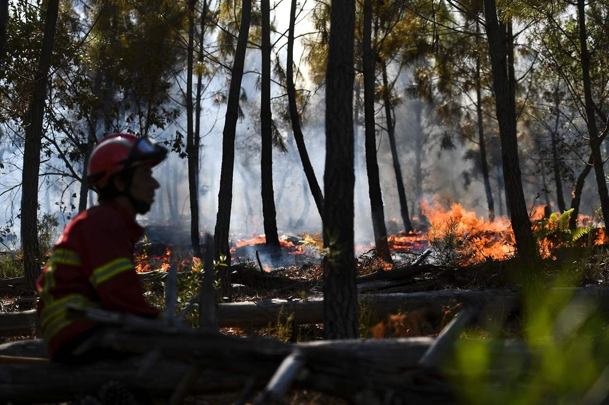 A firefighter watches the progression of a wildfire in a forest surrounding the village of Bracal in Abrantes, on August 11, 2017.  Firefighters aided by calmer winds were gaining control of wildfires raging across drought-hit Portugal on August 11, 2017 but warned the fire danger remained high in the coming days. Some 1,600 firefighters backed by 500 vehicles were battling 11 blazes that were burning out of control in the centre and north of the country, the civil protection agency said on its website. / AFP PHOTO / PATRICIA DE MELO MOREIRA
