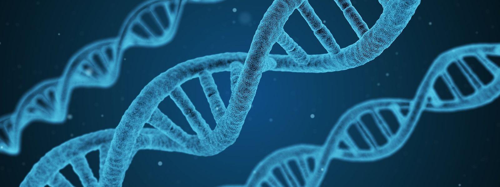 Durch die Genschere CRISPR/Cas9 ist Wissenschaftlern im Kampf gegen den HIV-Virus ein Durchbruch gelungen.