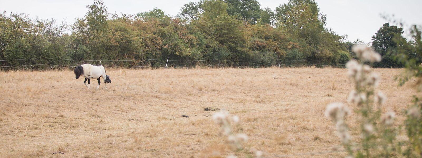 Die Dürre zeigt sich auch in Luxemburg.