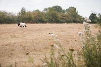 Landwirtschaft, Dürre, Trockenheit, Canicule, Agriculture, Agrikultur, Kuh, Pferd, Rinder, Bauer, Foto: Lex Kleren/Luxemburger Wort