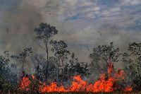27.08.2019, Brasilien, ---: Feuer breitet sich in einem Waldstück aus. In Südamerika wüten derzeit schwere Waldbrände. Durch Brandrodung und Abholzung vernichtet der Mensch seit Jahrtausenden die Waldbestände - nicht zuletzt in Europa. In vielen Erdregionen toben die Brände derzeit besonders heftig. Vor allem Brasilien, Venezuela, Bolivien und Kolumbien sind von den Feuern betroffen. Foto: Xinhua/NOTIMEX/dpa +++ dpa-Bildfunk +++