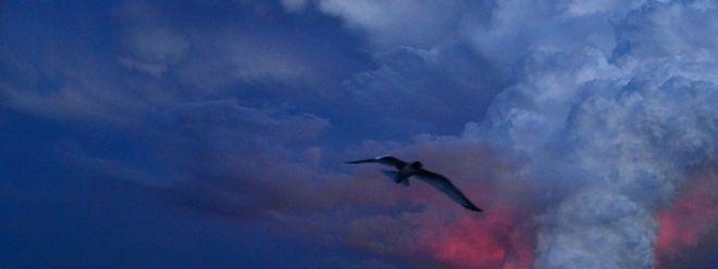 Am Montagmorgen hat der 1707 Meter hohe Vulkan auf der Insel Isabela Lava gespuckt.