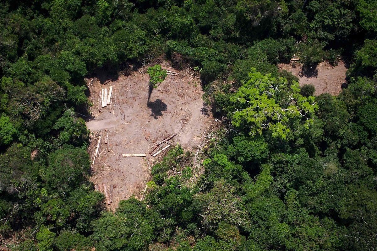 Greenpeace-Aktivisten dokumentieren eine Lichtung, auf der illegal abgeholzt wird. (Foto von 2014)