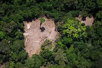 "(FILES) File photo taken on October 13, 2014 showing an aereal view of an illegal felling area in the Amazon forest during an overflight by Greenpeace activists over areas of illegal exploitation of timber, as part of the second stage of the ""The Amazon's Silent Crisis"" report, in the state of Para, Brazil, - The head of Brazil's National Institute for Space Research (INPE) Ricardo Galvao said on Friday he's going to be sacked following a row with President Jair Bolsonaro over deforestation in the Amazon rainforest. Galvao had accused far-right Bolsonaro of ""cowardice"" for having publically questioned satellite data produced by INPE that showed Amazon rainforest deforestation had increased 88 percent in June compared to the same period one year earlier. (Photo by RAPHAEL ALVES / AFP)"