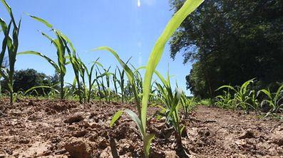 Die aktuelle Trockenheit macht der Landwirtschaft zu schaffen.